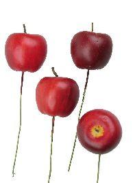 Apfel mit Draht ROT 3144 3,5cm / Styrofoam