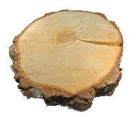 Birkenscheiben NATUR 25841 Ø20-25cm x 3,5cm  2.Wahl
