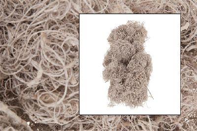 Curly Moos white washed  27600 500g  Bastelmoos  Dekomoos