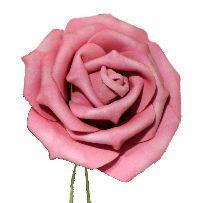 Rose Foam  Schaumrose Foamrose rosa  110185-20 Ø5cm