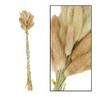 Lagurus / Samtgras NATUR 42361 45-50cm  Hasenschwanz Gras