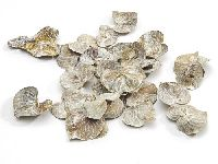 Coracao Blätter WEISS GEKALKT 1738 getrocknet 2,5-4cm